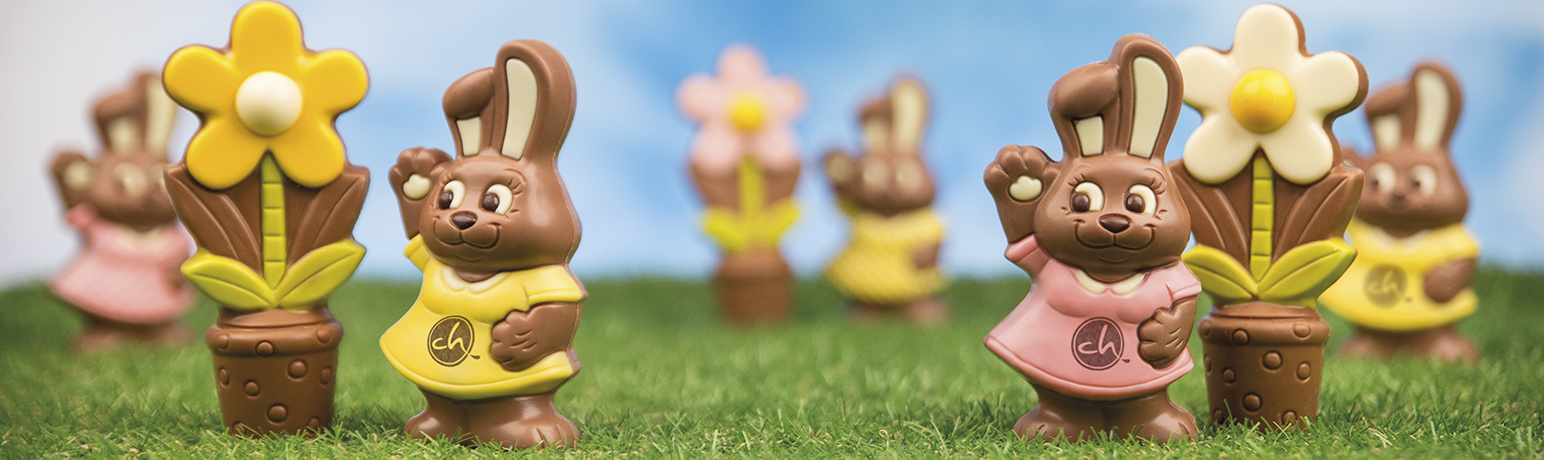 Bildergebnis fr poze cu iepurasi de ciocolata